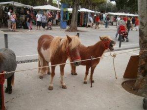 Ponies in Mahon